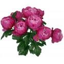 GLAIEUL 10 fleurs